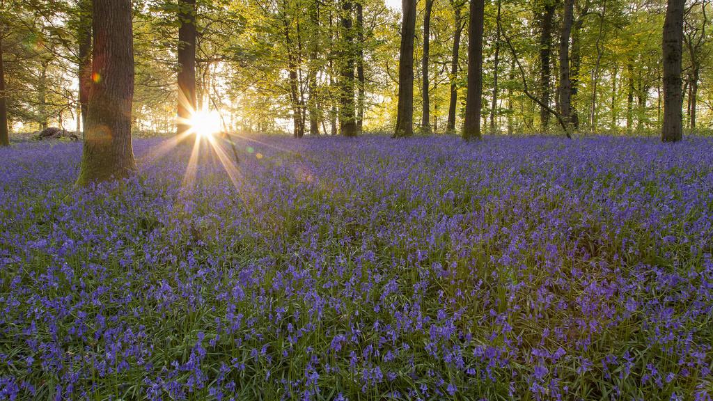 Gloucestershire Woodland